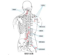 骨质增生理疗仪